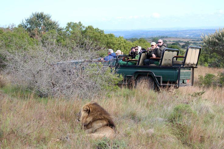 Ideale Einsteigerreise für Südafrika. In Kapstadt angekommen fahren Sie mit der Seilbahn auf den Tafelberg und lernen die Stadt bei einer Rundfahrt kennen. Nach einem kurzen Flug nach Johannesburg haben Sie vier spannende Tage für Safari im Krüger Nationalpark! 14 Tage geführte Erlebnisreise.