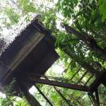 Foto de Reserva Natural Tanimboca
