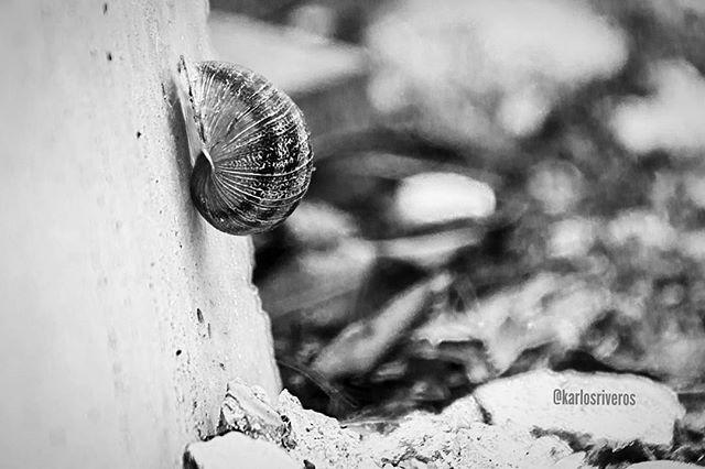 Caracol #animal #animals #photography #photographer #photo #foto #fotografia #nature #naturaleza #caracol #bnw #blackandwhite
