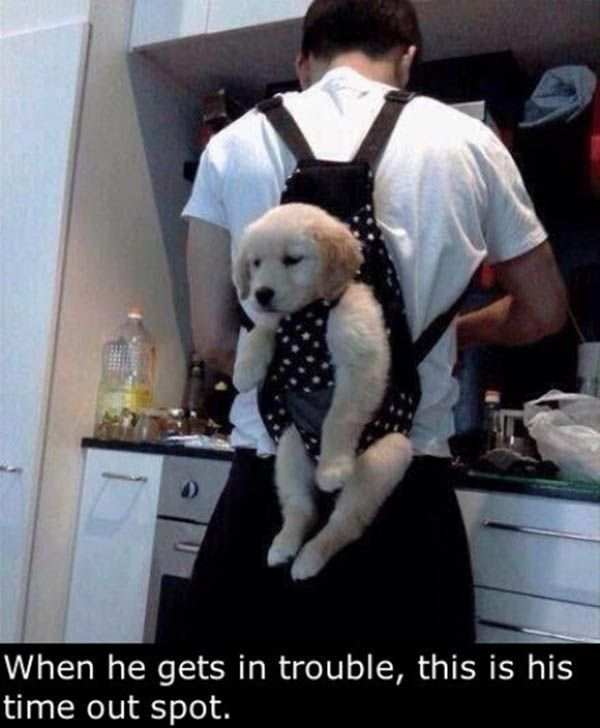 Keeps him out of trouble... #funny if only rocky could fit in one!