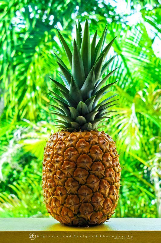 how to make pineapple plant produce fruit