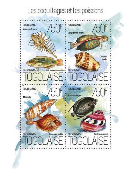 TG 13819 a – Shells and fish, (Venus comb murex, Halichoeres trimacuatus, Dactylopetrus volitans, Cymbiola nobilis, Mitra mitra, Tetrosomus stellifer, Pomacanthus paru, Neritina communis).