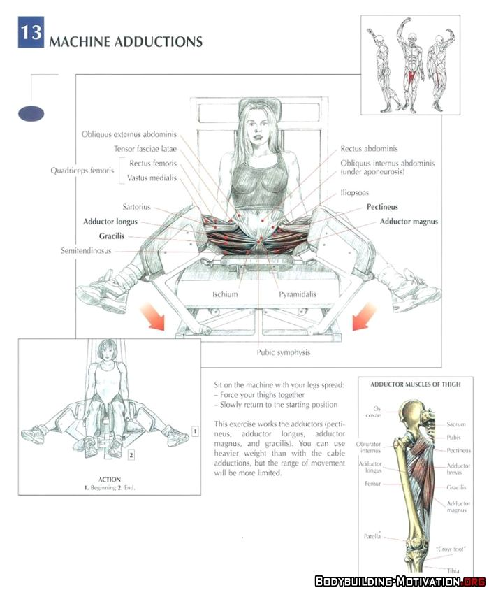 21 best Muscles images on Pinterest | Physical therapy, Muscle ...