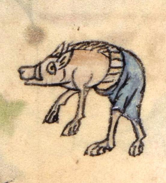Boar wearing pants (@BLMedieval, BL, Add 36684, 14th c.)