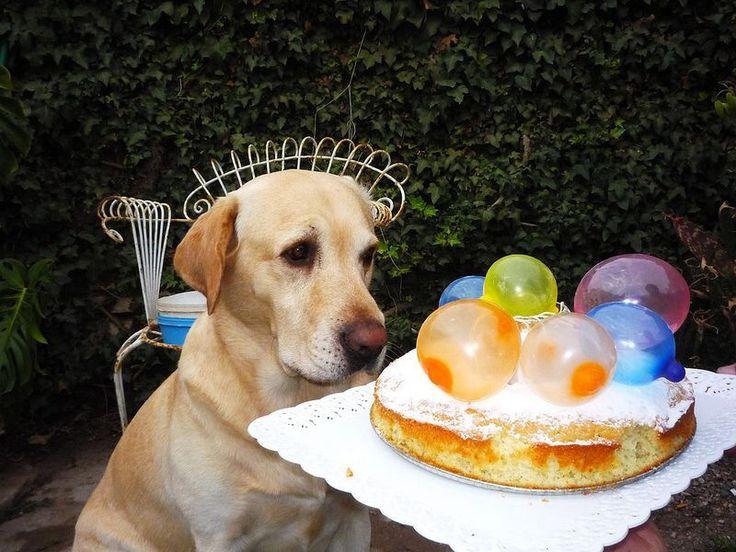 Happy birthday Tommy