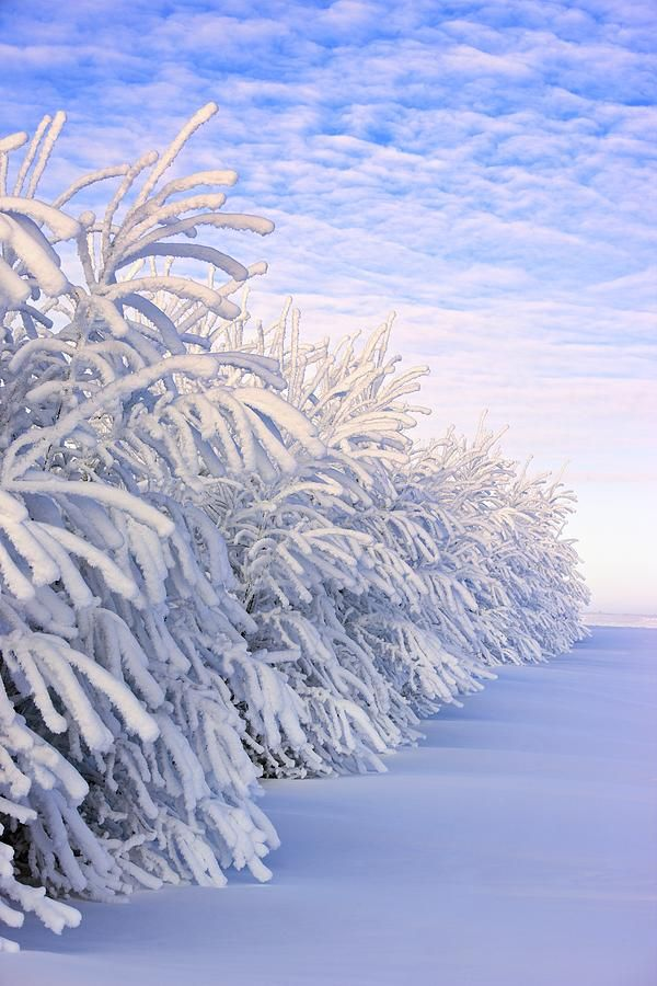 Covered In Snow Photograph by Carson Ganci - Covered In Snow Fine Art Prints and Posters for Sale