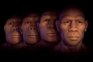 A Beginner's Guide to the Paleolithic Period or Stone Age: Conceptual image showing four stages of human evolution; Australopithecus, Homo Habilis, Homo Erectus and Homo Sapiens.