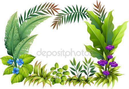 Картинки по запросу тропические растения вектор