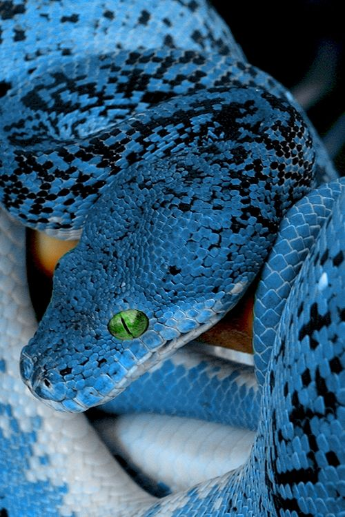 I hate snakes, but for the sake of the color blue, he's interesting..