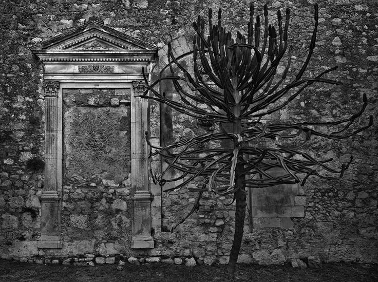 Parco Archeologico. Siracusa, 2010 © Pino Musi
