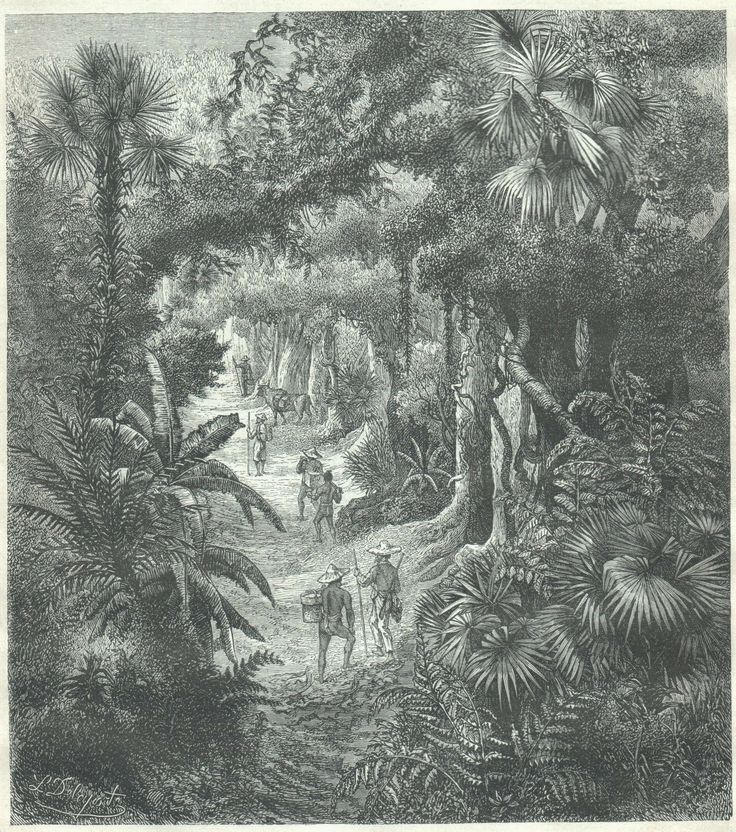 French engraving, Lao jungle, 1880s