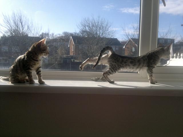 Kitten Yoga by Ivy De Vine, via Flickr