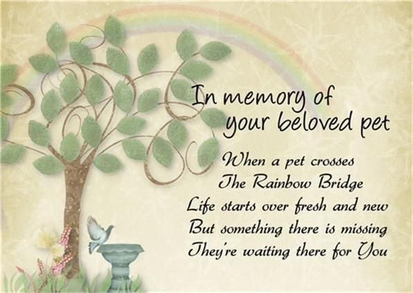 IN MEMORY OF PATCHES & ROSIE