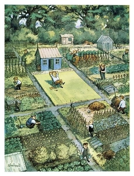 In the centre of a group of allotments full of people working a man whose allotment is only a lawn relaxes on a deckchair. Comic Colour Cartoon; artist: Norman Thelwell. Published in Punch Magazine 31 May 1954. Buy this cartoon as a framed print, a canvas print or a wall poster.