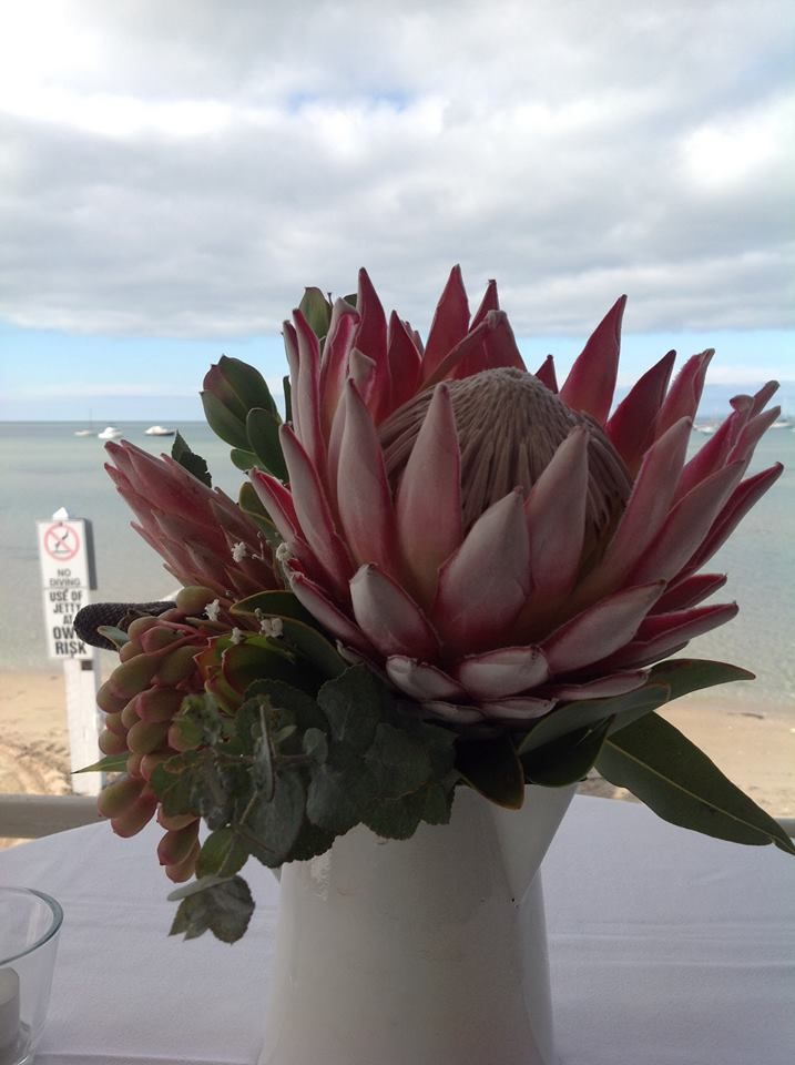 Gorgeous King protea in a Jug