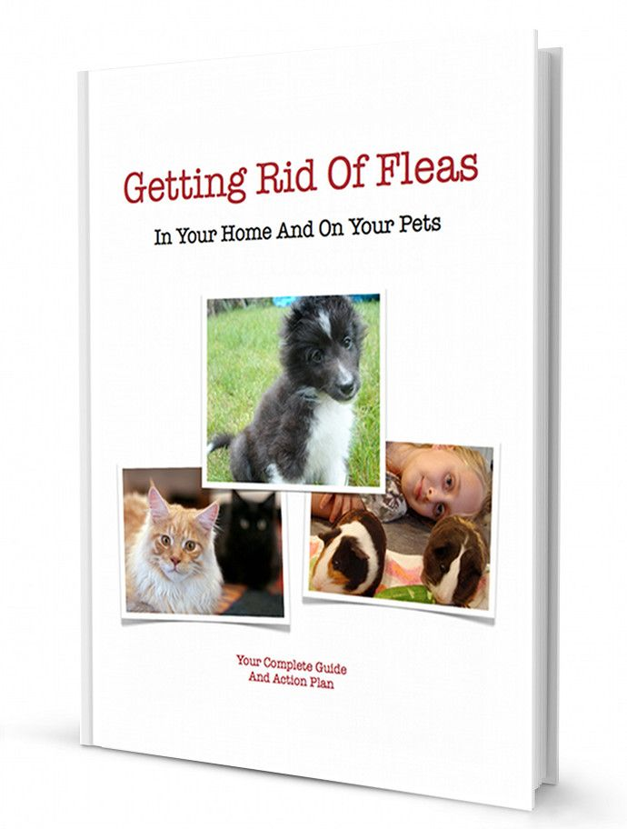 Your Guide To Getting Rid Of Fleas: Homemade Flea Spray - Super Easy Recipes