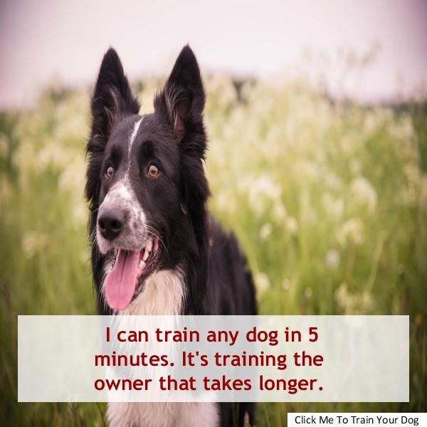 Tracking Dog Harness Dogs Dog Training School