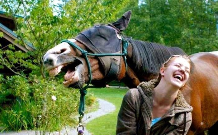 Horse and girl share a joke