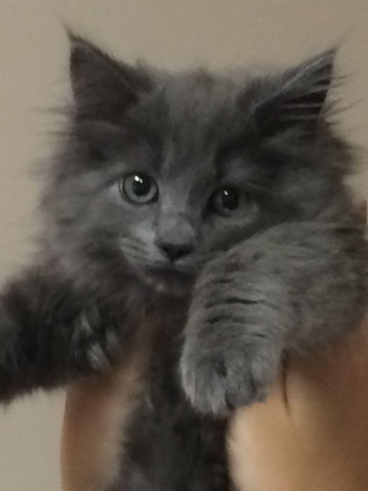 friendly black cat