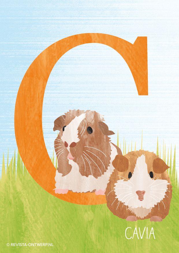 * De C is van cavia. Dit huisdiertje woont het liefst samen met een soortgenootje, daarom zie je ze hier ook gezellig met z'n tweeën.