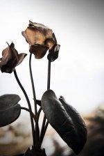 "Iron flowers handmade in The Dolomites by Bruno Corriani, ""magic hammer"""