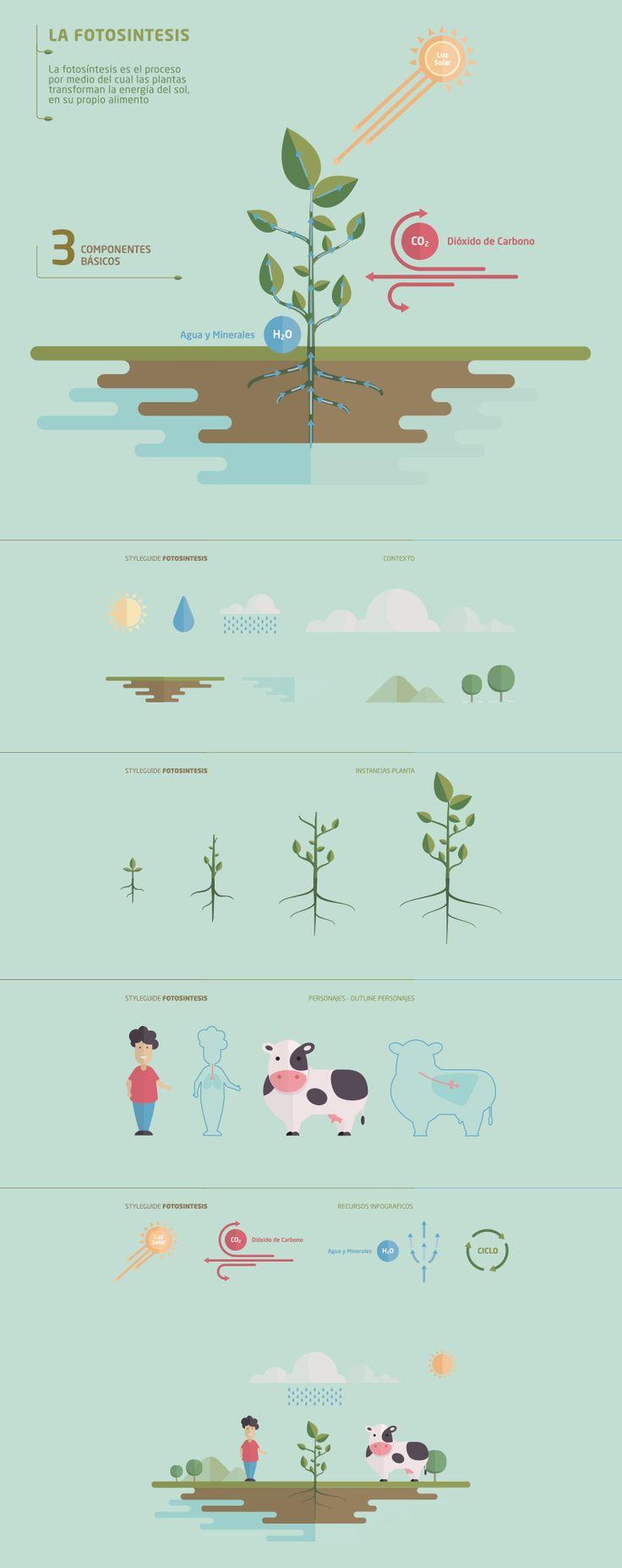 La-fotosintesis_esquema