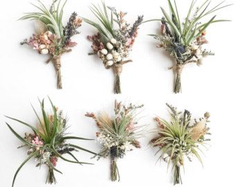 air plant boutonniere - Google Search