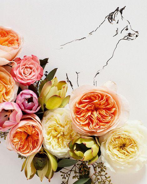 FoxBeautiful Flower, Flower Painting, Flower Art, Kari Herer, Gardens Rose, Life Photography, English Rose, Mixed Media Art, Foxes Illustration