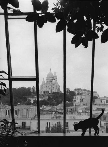 """Le chat à la fenêtre, Brassai. Retrouvez d'autres photos originales de #Paris sur le tableau """"Paris est une fête"""" @bonjourbibiche https://fr.pinterest.com/bonjourbibiche/paris-est-une-f%C3%AAte/"""