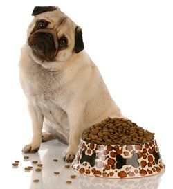 Dogs didn't eat kibble until the 1930s when the grain and meat industries needed a market for their rejects.