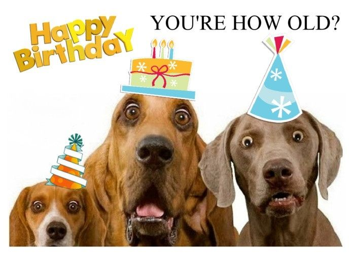 155 best Sayings Aging images – Weimaraner Birthday Cards
