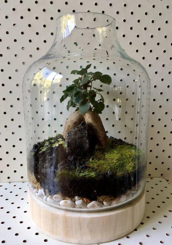 1000 Ideas About Bonsai Ficus On Pinterest Bonsai Jade