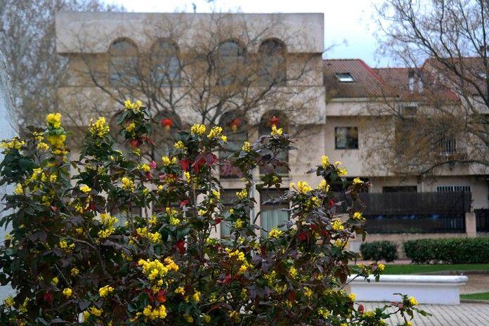 Primavera zen en el Parque Tierno Galván de Alcalá de Henares. Foto de Pedro Enrique Andarelli.