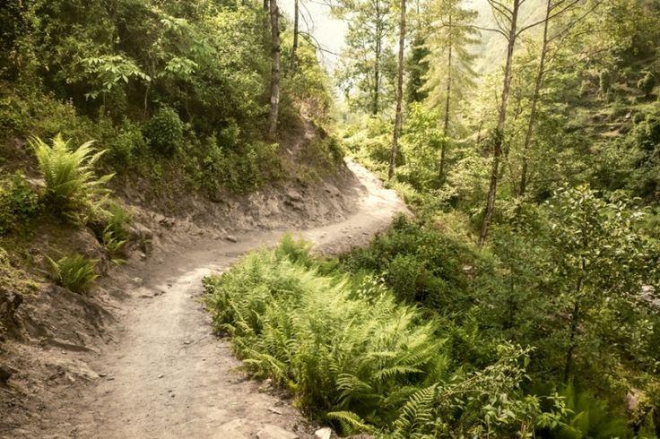 TAPETY - Tapeta - Cesta lesem 2