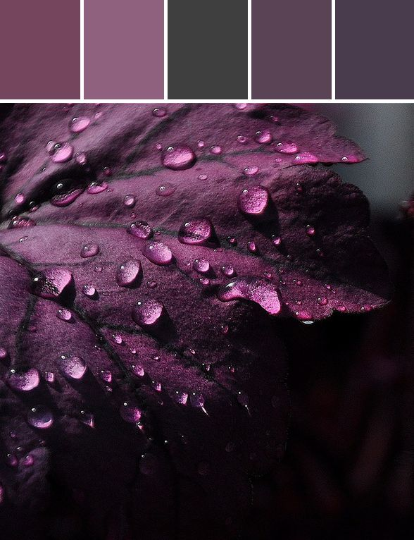 Shades Of Purple Paint best 25+ purple living room paint ideas only on pinterest | purple