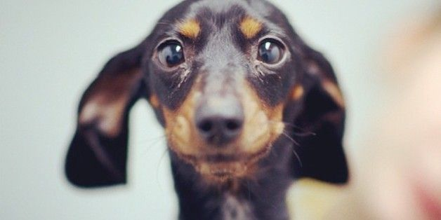 This Street Photo Blog For Dogs Will Make You Talk In That Voice You Only Use For Puppies