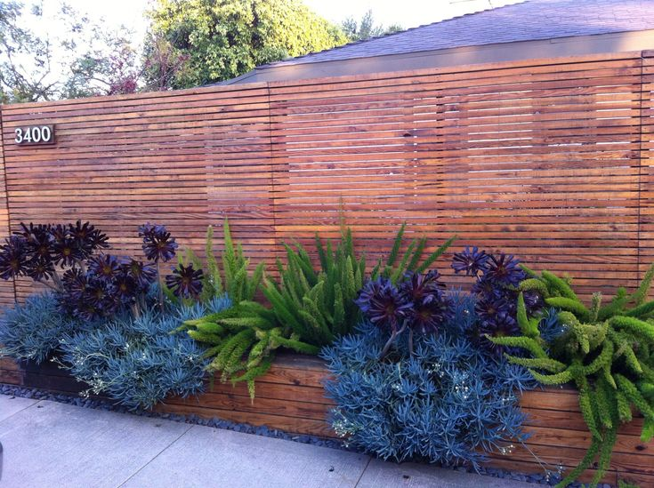 Front Yard Plants Backyard Project Pinterest Privacy