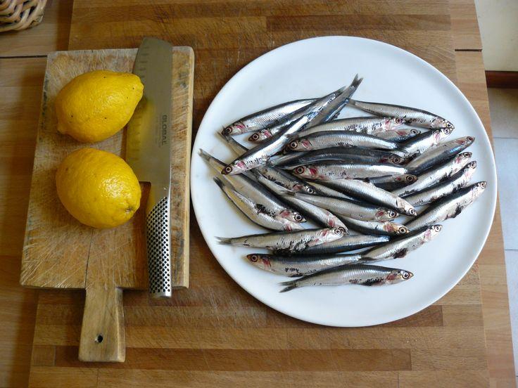 fresh anchovies
