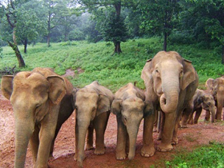 Similipal Tiger Reserve - in Odisha, India