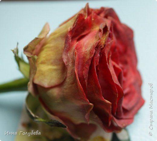 """""""Нас розы нежный аромат Манит в мечтательные дали, Она огонь, она и хлад, Созвездье радости-печали!!"""" ( Дмитрий Румата)  Не оставляю попыток слепить реалистичную увядающую розу) Вот и сейчас леплю букеты свежих,а тут нагрянуло вдохновение на такую))) Ну немного еще помучаю вас такой,а потом только свежие,обещаю) Все таки и в увядающих розах есть свое очарование и шарм,мне так кажется) фото 2"""