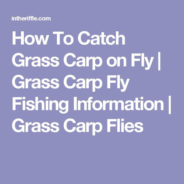 How To Catch Grass Carp on Fly | Grass Carp Fly Fishing Information | Grass Carp Flies