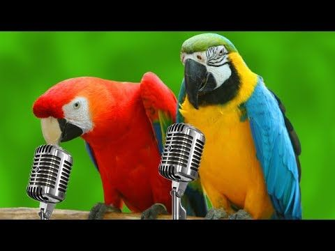 YouTube | mnogo lepo | Funny parrots, Talking parrots