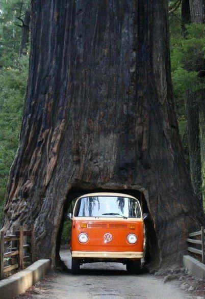 Дерево, через которое можно проехать, в Национальном парке секвой в Калифорнии