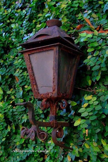 Viejo Farol Sobre Hiedra/Old Lantern On Ivy   Flickr: Intercambio de fotos