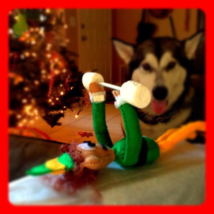 Must Work Out When Living With A Large Dog Elf On The Shelf
