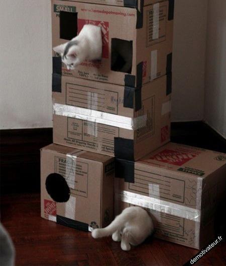image drole - Portal cat