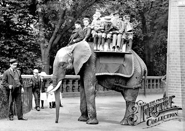 London Zoo, 1913 Elephant.And dont forget the chimps teaparty!