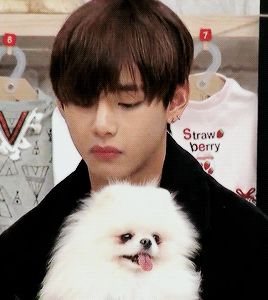 """I love this momeny, V is trolling the dog by blowing on it, then when the dog looks up to see who it was, he pretends he didn't do anything so the dog is like """"oh well, guess it was nothing""""."""