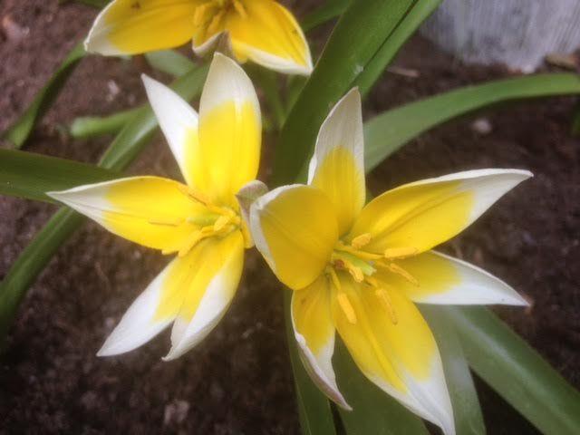 Jammer van de luis maar wat een mooie bloemen