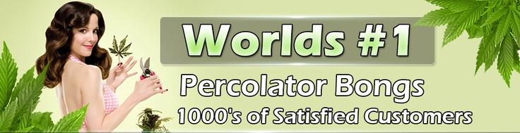 Percolator Bongs - The #1 Website For Buying Percolator Bongs Online!